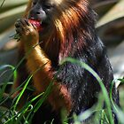 Tamarin by dtfrancis15
