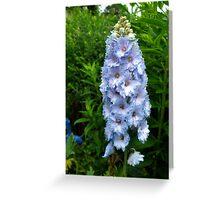 Violet Delphinium Greeting Card