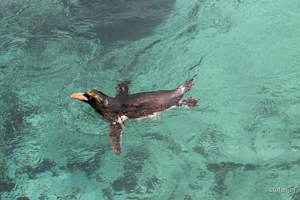 Penguin having the morning lap by stefanjb