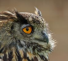 Eagle Owl by Roger Hall