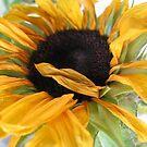 Sunflower by Caroline Anderson