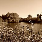 Sepia Lake by skid