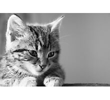 Black and White Kitten (non-clothing products) Photographic Print