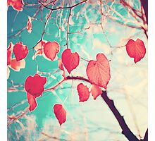 Our hearts are autumn leaves waiting to fall (Pink - Red fall leafs and brilliant retro blue sky) Photographic Print