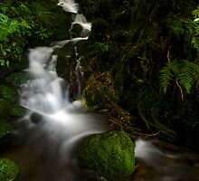 Small Kaimai stream by Paul Mercer