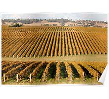 Autumn at Cumulus Estate Wines  Poster