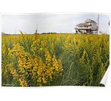 Yellow Field Poster