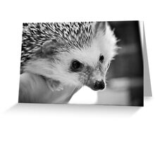 Hedgehog Love Greeting Card