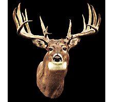 Mule Deer Head Photographic Print