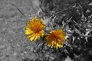 Yellow Flower by Allen Lucas