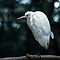 White bird 2001 03030015 by Fred Mitchell