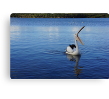 Huge Pelican Yawning! Canvas Print