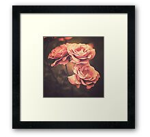 Three Pink Roses (Vintage Flower Photography) Framed Print