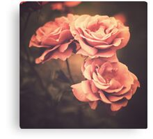 Three Pink Roses (Vintage Flower Photography) Canvas Print