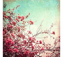 Pink Flowers on a Textured Blue Sky (Vintage Flower Photography) Photographic Print