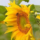 Full Bloom by lou-lou