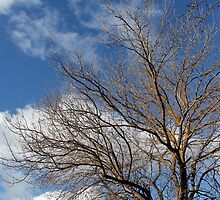 Tree in Winter by Steven Cousley