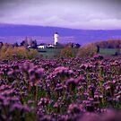 flowers by coltrane004