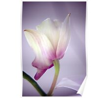 Dreaming Orchid Poster