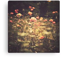 One Rose in a Magic Garden (Vintage Flower Photography) Canvas Print