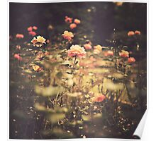 One Rose in a Magic Garden (Vintage Flower Photography) Poster