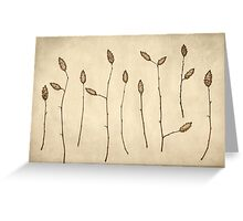 Fir Cones Forest Greeting Card