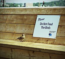 Please Do Not Feed the Birds by Jessica Dryden
