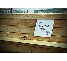 Please Do Not Feed the Birds Photographic Print