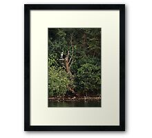 Great Blue Heron in Tree Framed Print