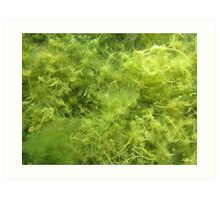 Underwater Vegetation 514 Art Print