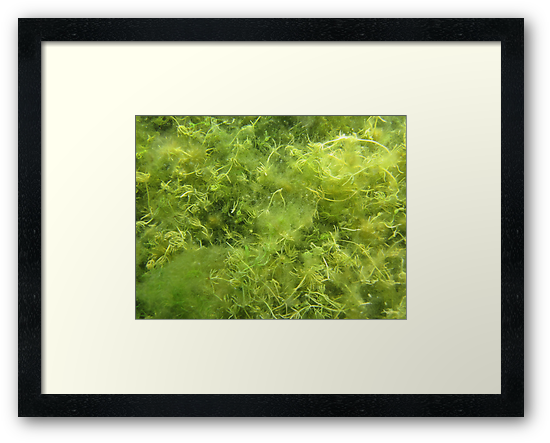 Underwater Vegetation 514 by Thomas Murphy