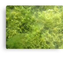 Underwater Vegetation 514 Metal Print
