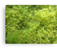 Underwater Vegetation 514 Canvas Print