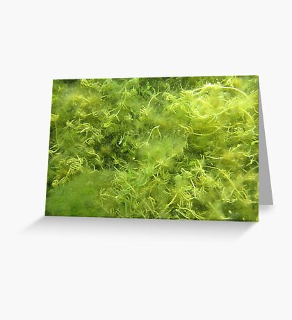 Underwater Vegetation 514 Greeting Card