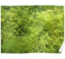 Underwater Vegetation 514 Poster