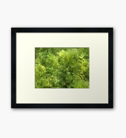 Underwater Vegetation 515 Framed Print