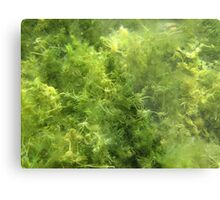 Underwater Vegetation 515 Metal Print