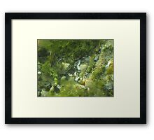 Underwater Vegetation 520 Framed Print