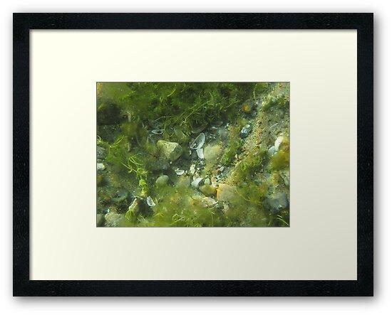 Underwater Vegetation 520 by Thomas Murphy