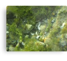 Underwater Vegetation 520 Metal Print