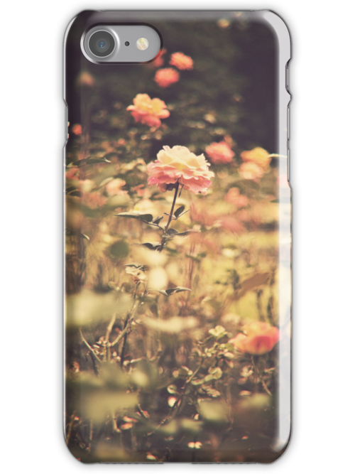 One Rose in a Magic Garden (Vintage Flower Photography) by Caroline Mint