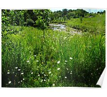 East Don Wetlands Poster
