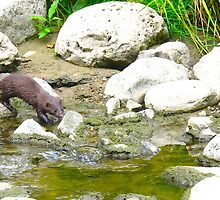 Sly Otter by MarianBendeth