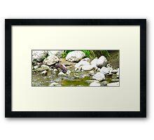 Sly Otter Framed Print