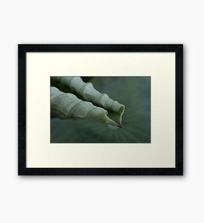 cardio ~ vascular Framed Print