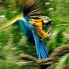 Bird, On The Go! by photoj