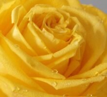 Yellow Rose Love Card and Gifts Sticker