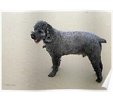 Miniature Poodle Poster