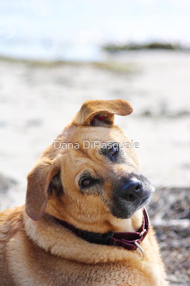 Dog Days by Dana DiPasquale