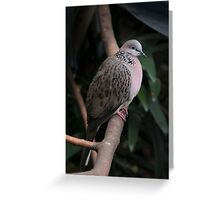 my dove Greeting Card